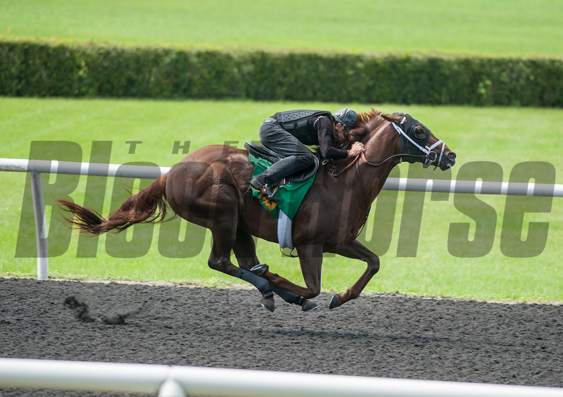 Hip403   Munnings- Zadie Creek . Work 9.4      @ OBS 2yrs old sales . in Ocala   Jun 8 th 2018.<br />   © Joe DiOrio/Winningimages.biz