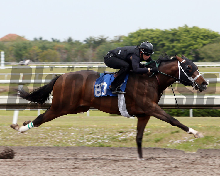 Hip 83, 2013 Fasig-Tipton Selected Two-Year Olds in Training Sale.<br /> colt; Harlan's Holiday - Life's a Dance, by Gone West<br /> Photosbyz.com