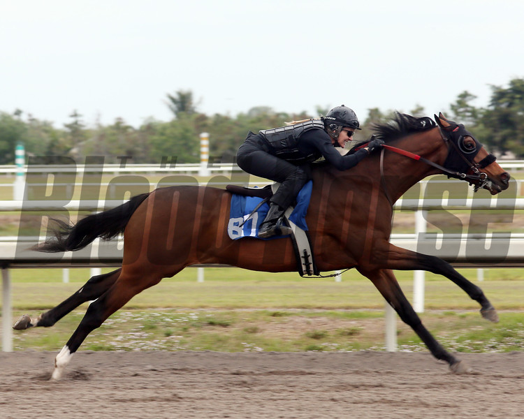Hip 87, 2013 Fasig-Tipton Selected Two-Year Olds in Training Sale.<br /> colt; Tapit - Winter Garden, by Roy<br /> Photosbyz.com