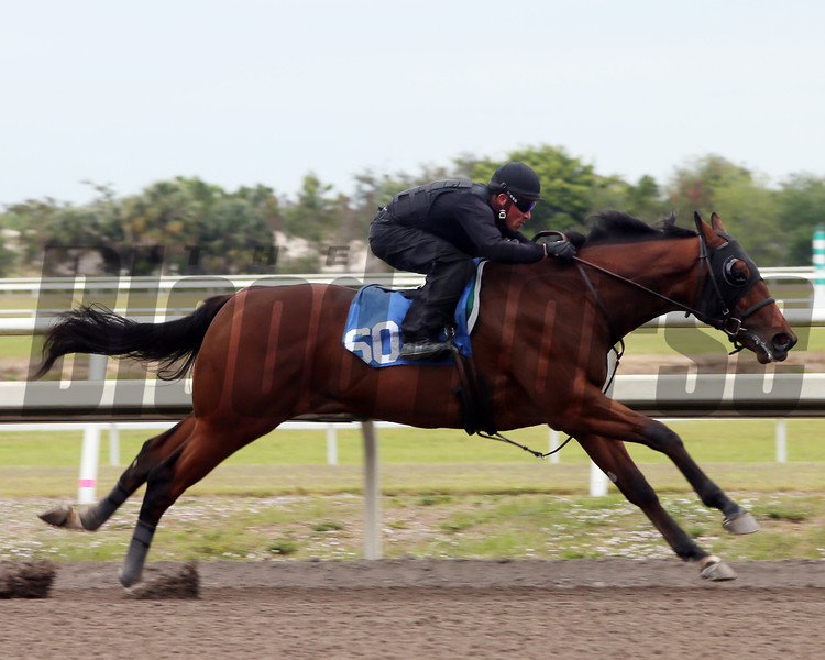 Hip 60, 2013 Fasig-Tipton Selected Two-Year Olds in Training Sale.<br /> colt; Pulpit - Spritely, by Touch Gold<br /> Photosbyz.com