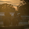 Morning    @ OBS 2yrs old sales . in Ocala   Jun 7 th 2018.<br />   © Joe DiOrio/Winningimages.biz