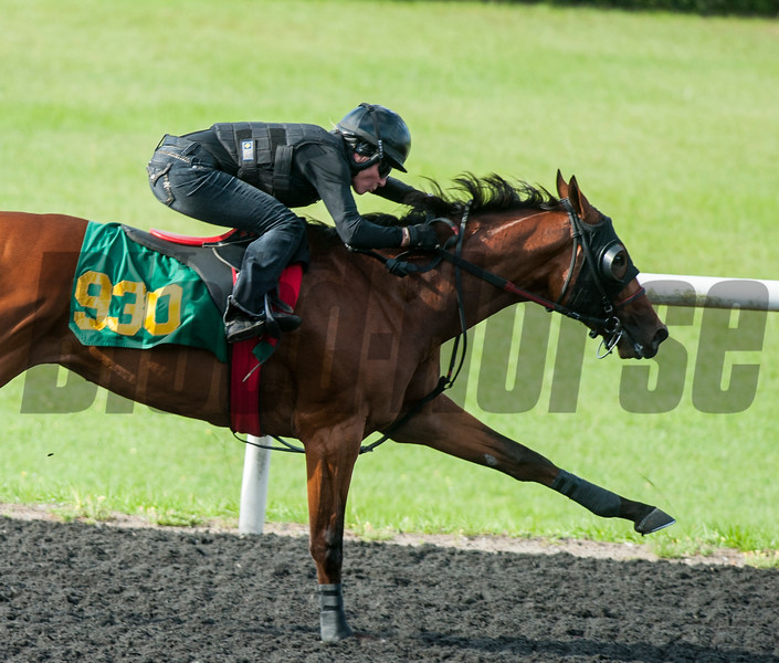 Hip930  Atreides- Lanida    . Work 21.    @ OBS 2yrs old sales . in Ocala   Jun 10th 2018.<br />   © Joe DiOrio/Winningimages.biz