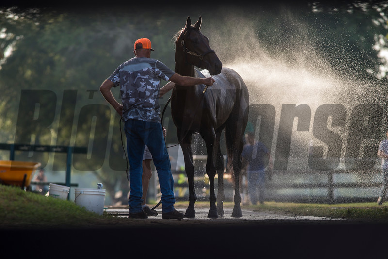 Morning    @ OBS 2yrs old sales . in Ocala   Jun 6 th 2018.<br />   © Joe DiOrio/Winningimages.biz