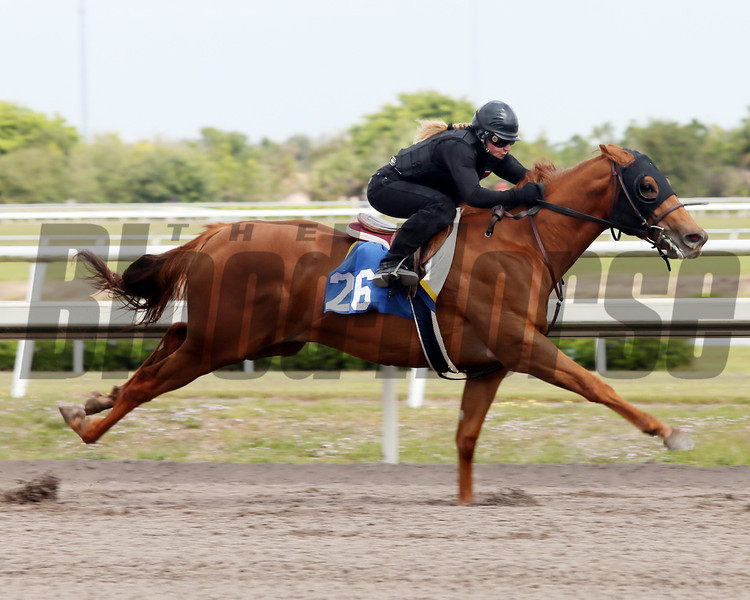 Hip 26, 2013 Fasig-Tipton Selected Two-Year Olds in Training Sale.<br /> filly; Henny Hughes - Open Window, by Trempolino<br /> Photosbyz.com