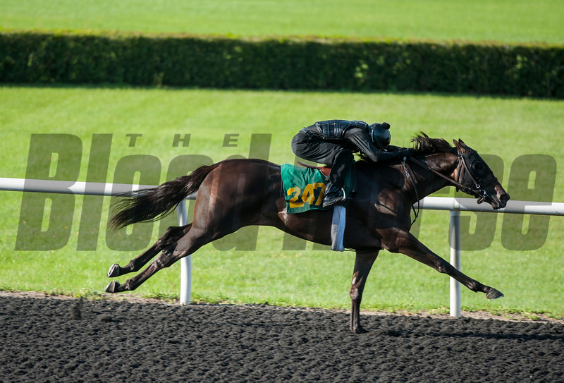 Hip247 . Flatter - Skip Stone  . Work 20.4    @ OBS 2yrs old sales . in Ocala   Jun 7 th 2018.<br />   © Joe DiOrio/Winningimages.biz