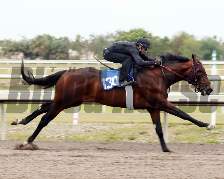Hip 130, 2013 Fasig-Tipton Selected Two-Year Olds in Training Sale.<br /> colt; Bernardini - Heart of Grace, by Exploit<br /> Photosbyz.com