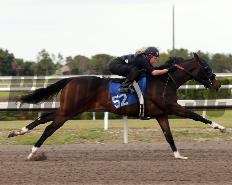 Hip 52, 2013 Fasig-Tipton Selected Two-Year Olds in Training Sale.<br /> filly; Tiz Wonderful - Shakenbythestorm, by Storm Cat<br /> Photosbyz.com