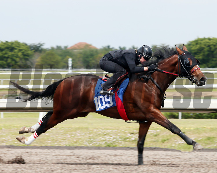 Hip 109, 2013 Fasig-Tipton Selected Two-Year Olds in Training Sale.<br /> colt; Tiznow - Cool Storm, by Storm Cat<br /> Photosbyz.com