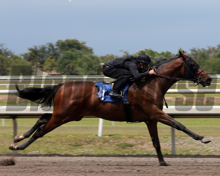 Hip 41, 2013 Fasig-Tipton Selected Two-Year Olds in Training Sale.<br /> colt; Elusive Quality - Regal Engagement, by Cat Thief<br /> Photosbyz.com