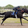 Hip 72, 2013 Fasig-Tipton Selected Two-Year Olds in Training Sale.<br /> colt; Arch - Tell It, by Storm Cat<br /> Photosbyz.com