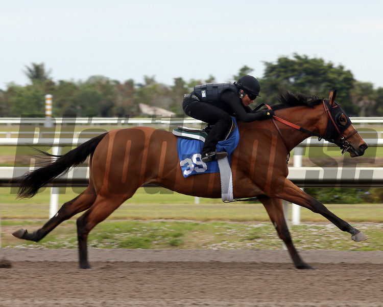 Hip 39, 2013 Fasig-Tipton Selected Two-Year Olds in Training Sale.<br /> filly; Malibu Moon - Rebel Account, by Dixieland Band<br /> Photosbyz.com