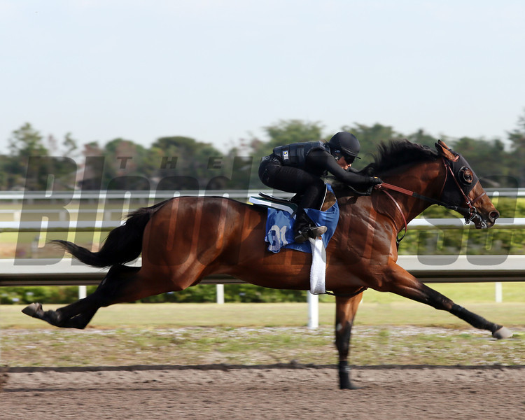 Hip 131, 2013 Fasig-Tipton Selected Two-Year Olds in Training Sale.<br /> colt; Bernardini - Hishi Aspen by Forestry<br /> Photosbyz.com
