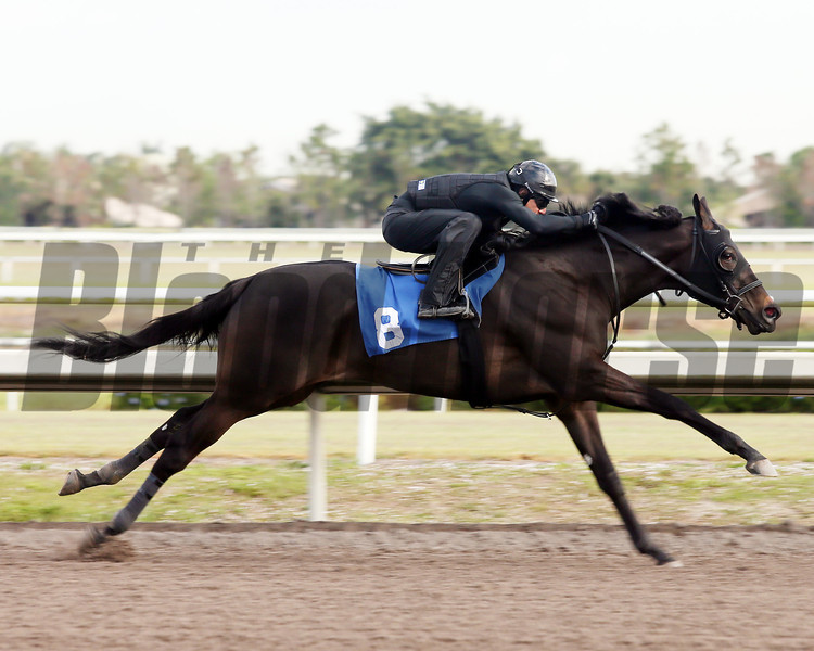 Hip 8, 2013 Fasig-Tipton Selected Two-Year Olds in Training Sale.<br /> filly; Street Boss - Magic Smoke, by Smokester<br /> Photosbyz.com
