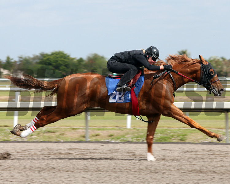 Hip 28, 2013 Fasig-Tipton Selected Two-Year Olds in Training Sale.<br /> colt; Malibu Moon - Partyship, by Premiership<br /> Photosbyz.com