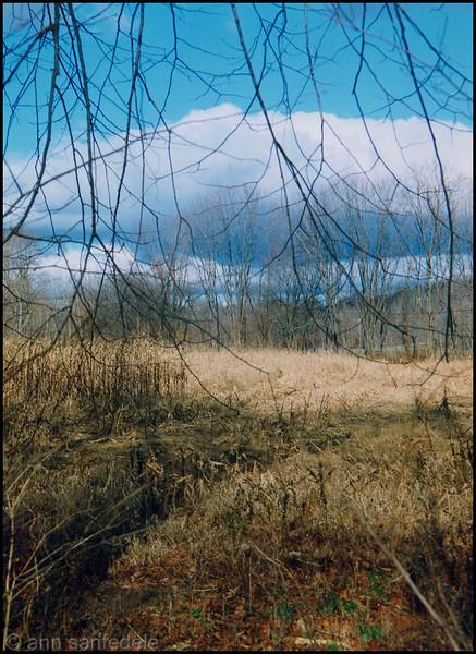 Overgrown field in late autumn - Mountainville, New York