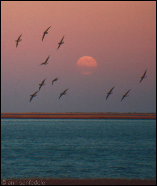 Moonrise at the Brigantine Wildlife Refuge, New Jersey