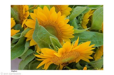 10sunflowers