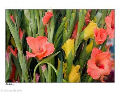 gladiolusforwallcalendar