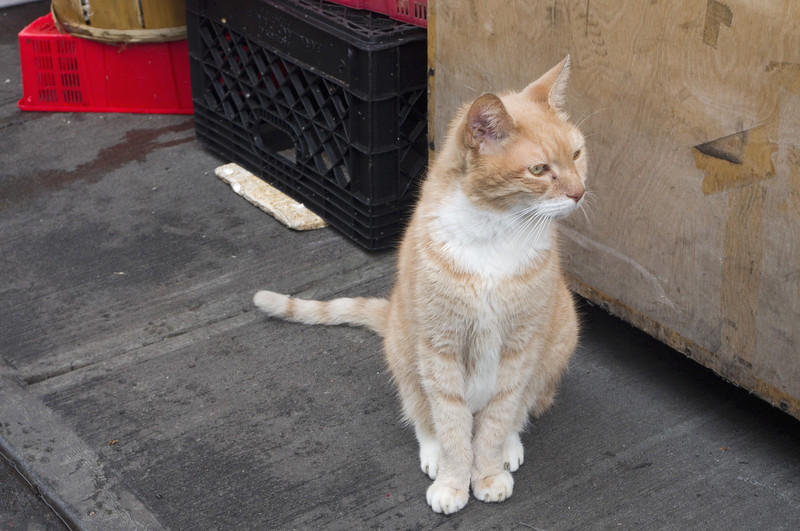 Grand Street Fish Market Cat