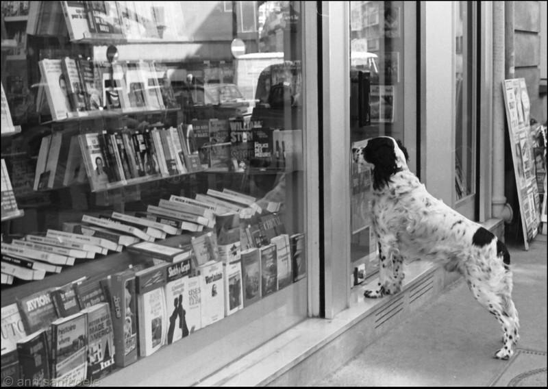 Dog lookingin bookstore