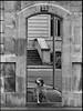 Dog in Archway Versailles