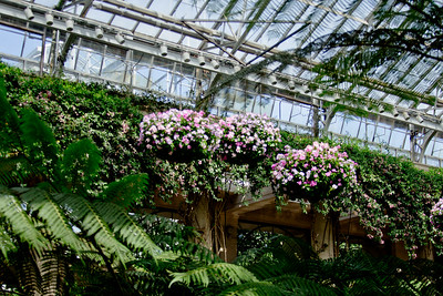 Flowers and Ceilings