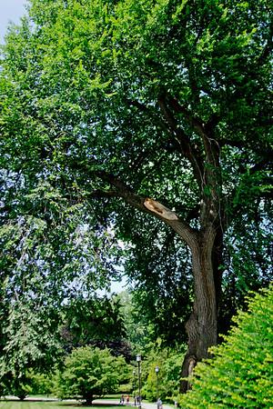 Wide Angle Broken Tree