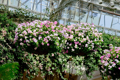 Pink and White Hanging Flowers