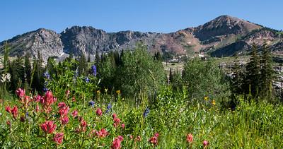 Alta Pink Devil's Castle & Sugarloaf peak