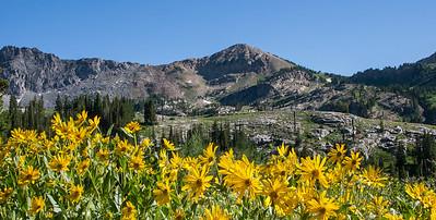 Alta Yellow flowers Devil's Castle & Sugarloaf peak