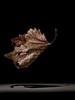Samothrace, 2019 | size 130 X 97 cm