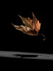 Firebird, 2019 | size 130 x 97 cm
