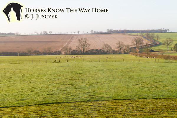 March 20th 2012, Holistic Equitation, England