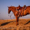 20130519_Cowboys and Horses_9824