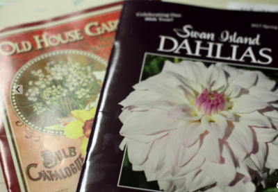 Dahlia workshop with Maureen Sprong 10/17
