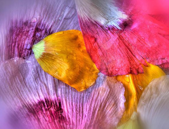 Color Chaos<br /> Steve Traudt