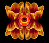 The Eye<br /> Steve Traudt