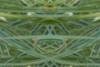Fantasy on Grasses<br /> Nancy Myer