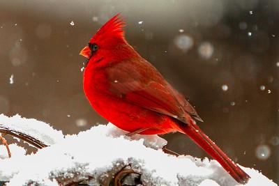 Jim Davis_Snow Bird