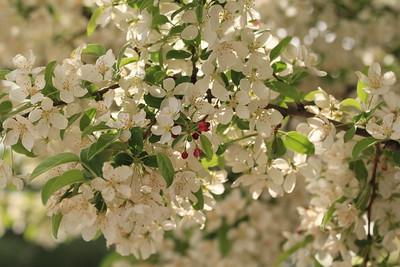 Hughes,Holly - Pink Blossom