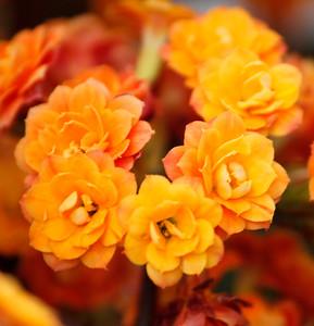 Fredrickson_Tammy_FlowerCluster