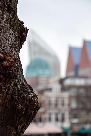 Fotograaf: Johanneke