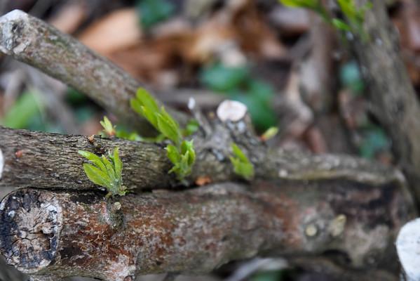Fotograaf: Marleen. Thema: De kracht van de natuur.