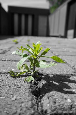 Fotograaf: Tamara. Thema: De natuur vindt altijd zijn weg.