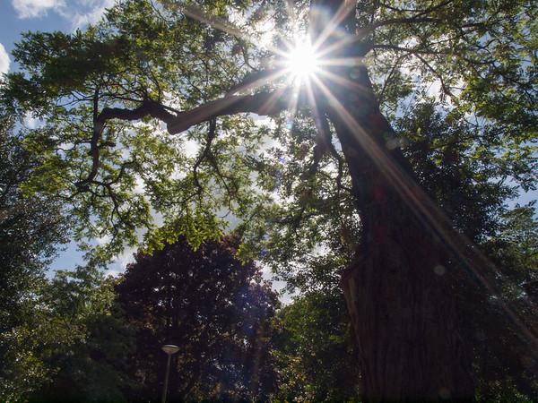 Fotograaf: Wilma. Thema: De kracht van de natuur.