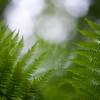 Fotograaf: Theo. Thema: puur natuur.