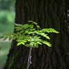 Fotograaf: Rene. Thema: puur natuur.