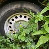 Fotograaf: Henri. Thema: de natuur overwint.