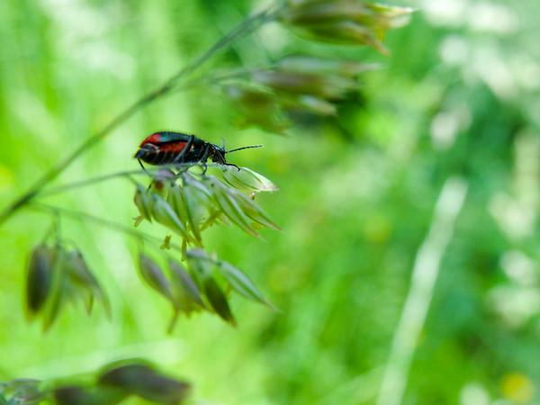 Fotograaf: Judith. Thema: details in de natuur.