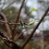 Fotograaf: Ils. Thema: De Kracht van de natuur.